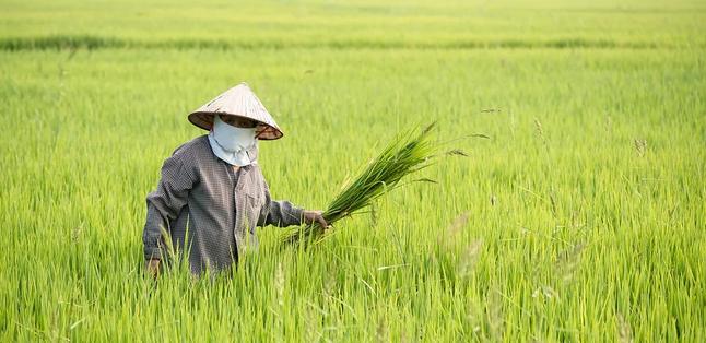 基于物联网的智慧农业是什么?我国在推行智慧农业中面临哪些难点?